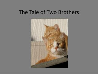The Tale of Two Brothers