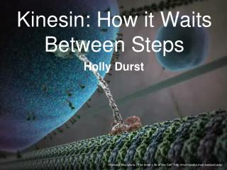 Kinesin: How it Waits Between Steps