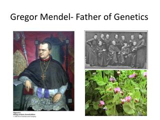 Gregor Mendel- Father of Genetics