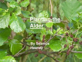 Planting the Alder