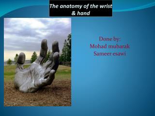 The anatomy of the wrist & hand