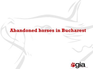 Abandoned horses in Bucharest