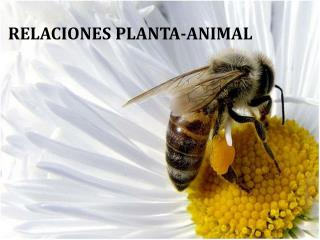 RELACIONES PLANTA-ANIMAL