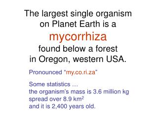 The largest single organism  on Planet Earth is a  mycorrhiza found below a forest  in Oregon, western USA.
