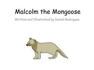 Malcolm the Mongoose