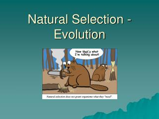 Natural Selection -  Evolution