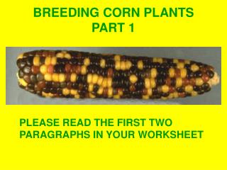 BREEDING CORN PLANTS PART 1