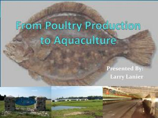 From Poultry Production to Aquaculture