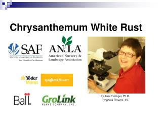 Chrysanthemum White Rust by Jane Trolinger