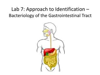 Lab 7: Approach to Identification �  Bacteriology of the Gastrointestinal Tract