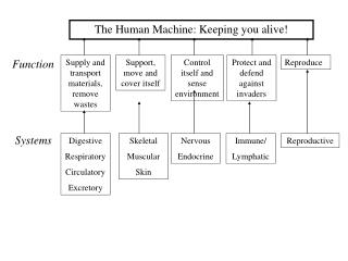 The Human Machine: Keeping you alive!