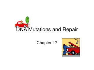 DNA Mutations and Repair