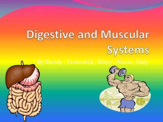 Digestive and Muscular Systems
