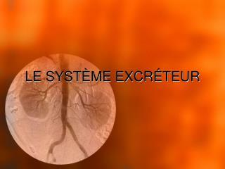 LE SYSTÈME EXCRÉTEUR