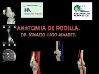 ANATOMIA DE RODILLA.