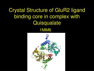 Crystal Structure of GluR2 ligand binding core in complex with Quisqualate