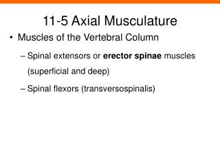 11-5 Axial Musculature