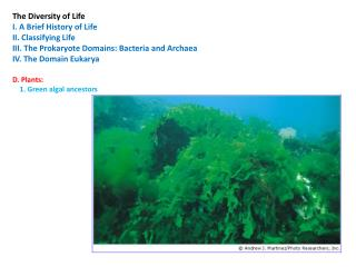 The Diversity of Life  I. A Brief History of Life II. Classifying Life III. The Prokaryote Domains: Bacteria and Archae