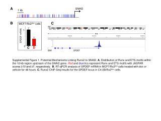 SPDEF mRNA