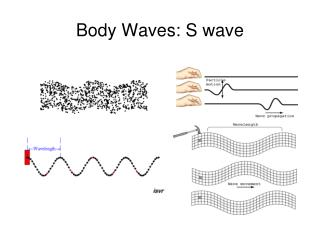 Body Waves: S wave