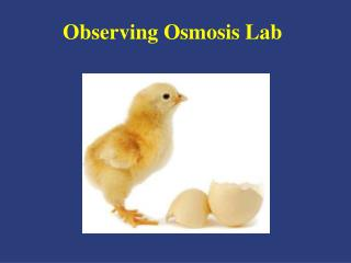 Observing Osmosis Lab