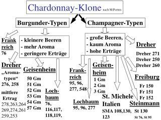 Chardonnay-Klone nach M.Porten