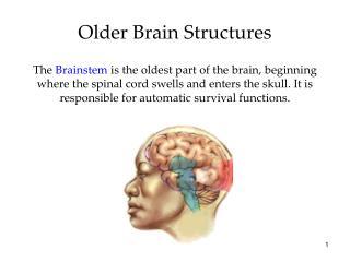 Older Brain Structures