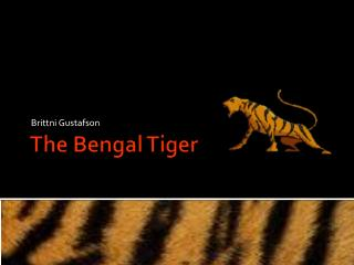 The Bengal Tiger