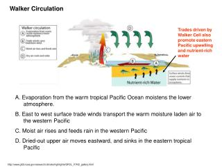 A. Evaporation from the warm tropical Pacific Ocean moistens the lower atmosphere.