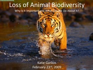 Loss of Animal Biodiversity Why Is It Important and What Can We Do About It? Katie Gankos February 23 rd , 2009