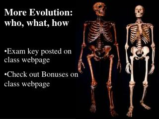 More Evolution: who, what, how Exam key posted on class webpage Check out Bonuses on class webpage