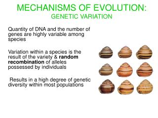 MECHANISMS OF EVOLUTION: GENETIC VARIATION