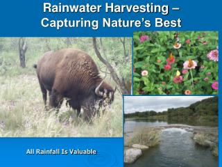 Rainwater Harvesting – Capturing Nature's Best