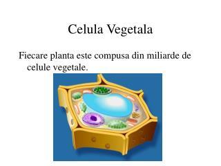 Celula Vegetala