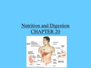 Nutrition and Digestion CHAPTER 20