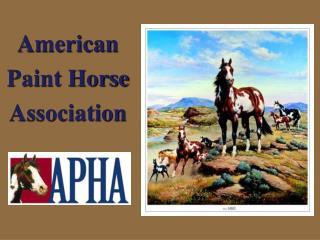 American Paint Horse Association
