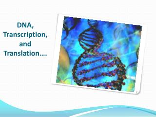DNA, Transcription, and Translation….