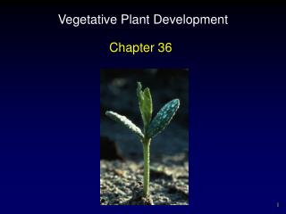 Vegetative Plant Development