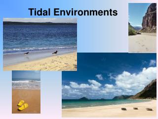Tidal Environments