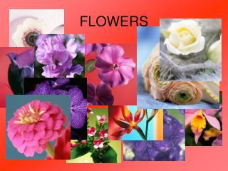 Flower PowerPoint