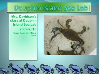 Dauphin Island Sea Lab!