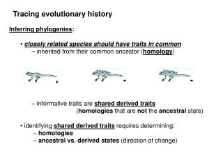 Inferring phylogenies : closely related species should have traits in common – inherited from their common ancestor ( h