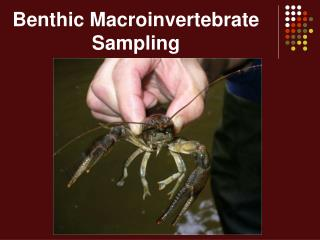 Benthic Macroinvertebrate Sampling