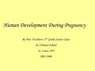 Human Development During Pregnancy