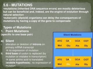 5.6 - MUTATIONS
