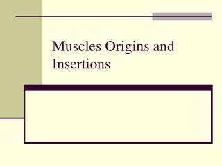 Muscles Origins and Insertions