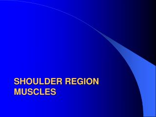 Shoulder region muscles