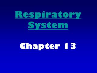 Respiratory System Chapter 13