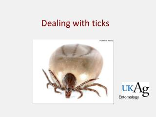 Dealing with ticks