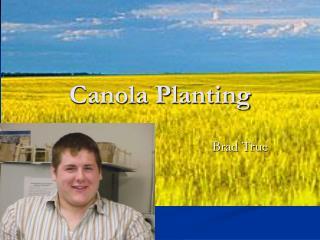Canola Planting
